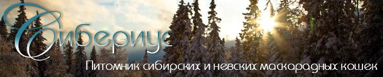 siberius-b